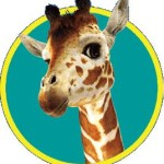 Toys R Us Giraffe dies in Boston Zoo