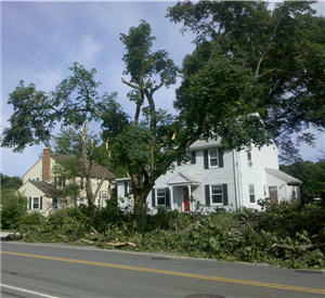Tree Taken Apart by Winds