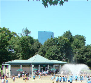 Boston Common Frog Pond in the Summer
