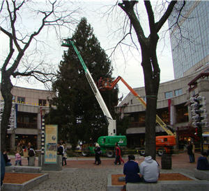 Faneuil Hall Tree Being Prepared 2010